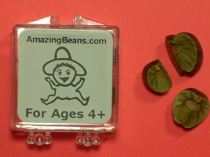 Mexican Jumping Beans 011